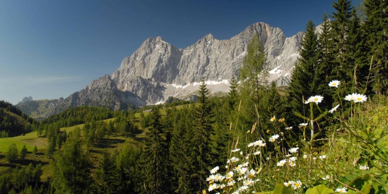 Ramsauer Almenspaziergang über die Austriahütte zum Brandriedel